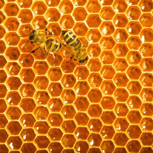 Zen Art & Design Artisanal Wooden Jigsaw Puzzle, Honeybees , Medium by Zen Art & Design