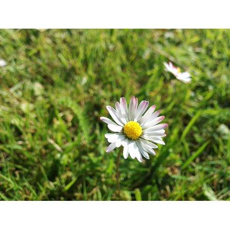 Flower Green Spring Flowers Blossom White Macro Poster Print 24 x 36