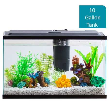 Aqua Culture 10-Gallon Aquarium Starter Kit With LED Lighting