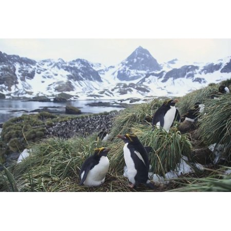 Macaroni Penguins Resting on the Shore Print Wall Art By - Halloween Macaroni Art