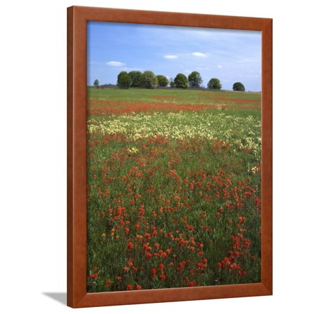 Indian Paintbrush meadow, Taberville Prairie Natural Area, Missouri, USA Framed Print Wall Art By Charles Gurche