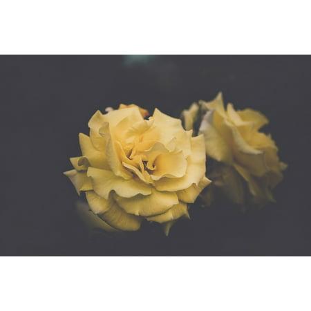 Canvas Print Flora Petals Flowers Bloom Hd Wallpaper Blossom Stretched Canvas 10 x