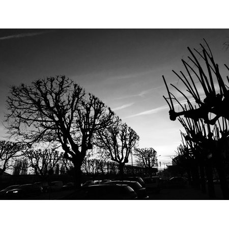 White Mood Peel (Peel-n-Stick Poster of Mood Sky Tree Back Light Dead Tree Black And White Poster 24x16 Adhesive Sticker Poster Print)