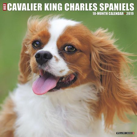 Cavalier King Charles Spaniel Dog (Just Cavalier King Charles Spaniels 2019 Wall Calendar (Dog Breed Calendar))