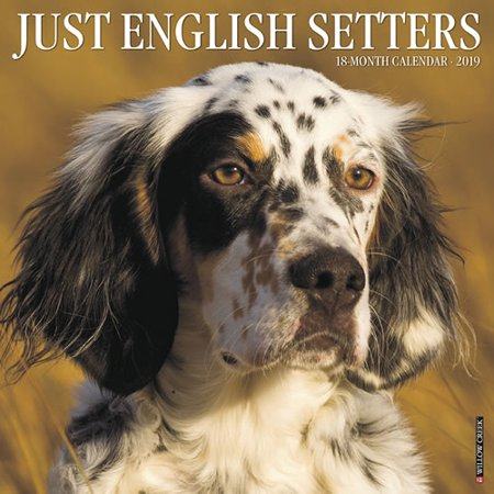 English Blue Willow - Willow Creek Press 2019 Just English Setters Wall Calendar
