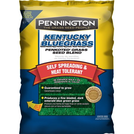 Pennington Grass Seed Kentucky Bluegrass, 7