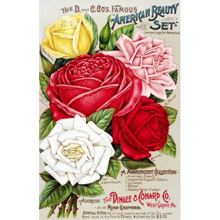 Dingee and Conard Co rose bulb and seed catalog from 19th century - Co Catalog