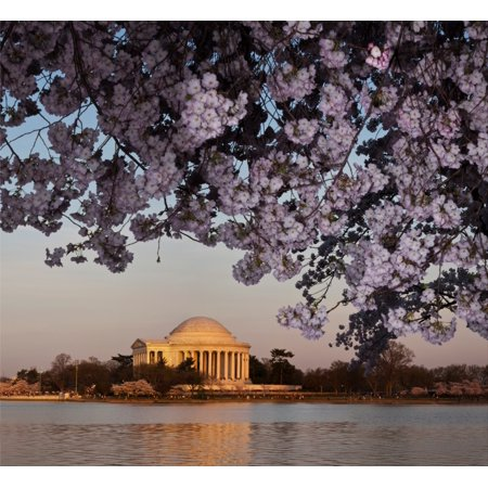 Traditional Jefferson Cherry (Cherry Blossom tree with a memorial in the background Jefferson Memorial Washington DC USA Stretched Canvas - Panoramic Images (24 x 24) )