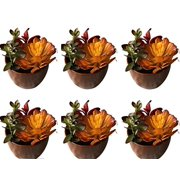"""Set of 6 - 6""""Ceramic Potted Artificial Faux Succulent Plants - AIHY3010(NOT TINY 3"""" PLANTS)"""