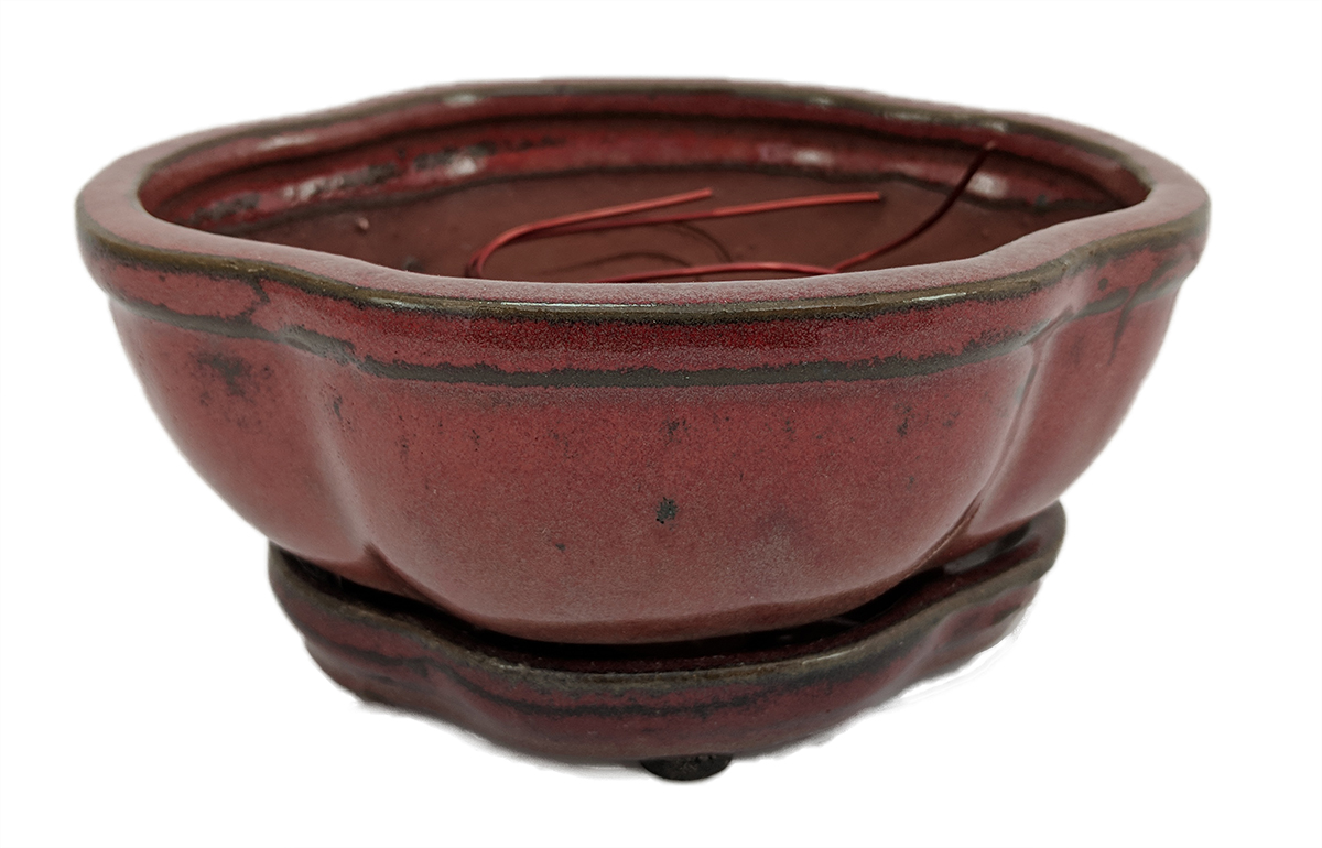 "Pro Bonsai Pot Saucer Pre-Wired Red Fancy Oval 6 3 8""x4 3 4""x2 5 8"" by"