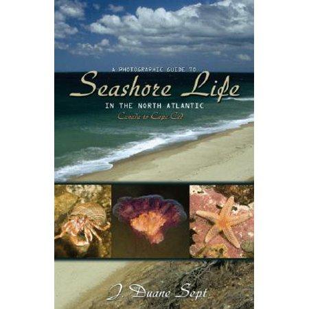 A Photographic Guide to Seashore Life in the North Atlantic : Canada to Cape Cod
