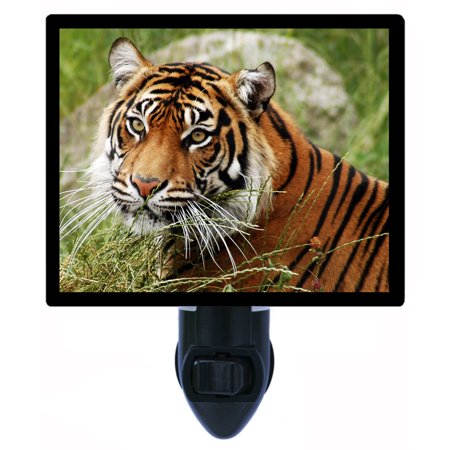 Night Light - Photo Light - Calm Tiger (Tigger Light)