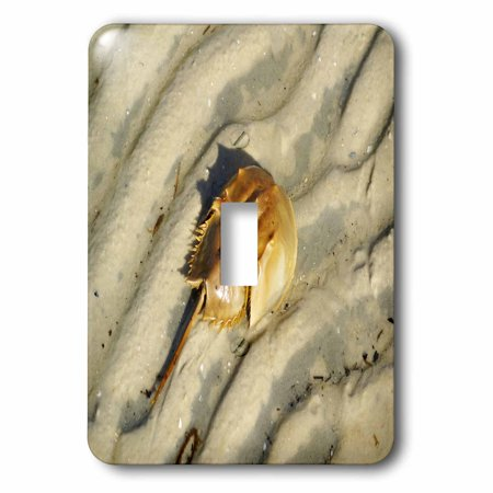 3dRose Print of Close Up Of Horseshoe Crab On Sand, Double Toggle - Horseshoe Toggle
