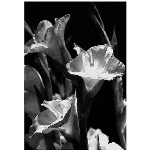 "Trademark Art ""Gladiolus VII"" Canvas Art by Martha Guerra, 22x32"