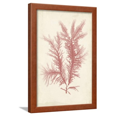 Coral Sea Feather II Framed Print Wall Art By Henry Bradbury (Art Com Feather Print)