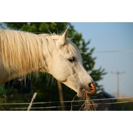 LAMINATED POSTER Horse Thoroughbred Arabian Stallion Mold Poster Print 24 x 36