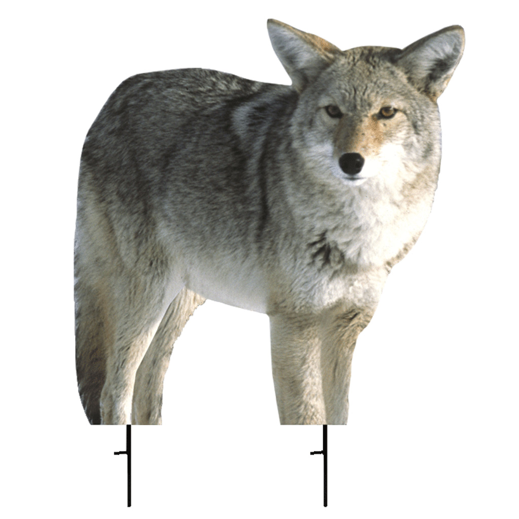 "Montana Decoy Kojo Coyote Predator Decoy 21"" x 22"""