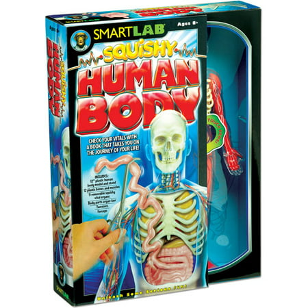Squishy Human Body Anatomy Kit