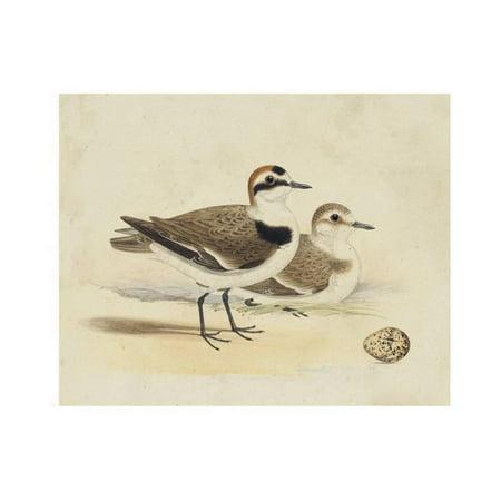 Meyer Shorebirds V Print Wall Art By H. l. Meyer