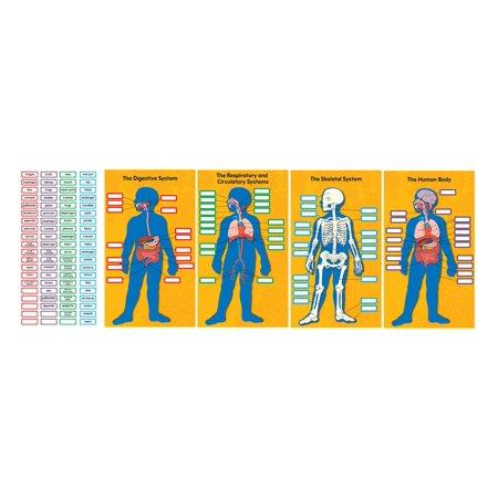 - Human Body Bulletin Board Set