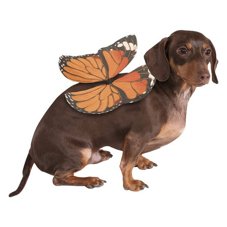 Dog Wings Pet Costume Orange (Monarch) - Small/Medium](Monarch Butterfly Costume Women)