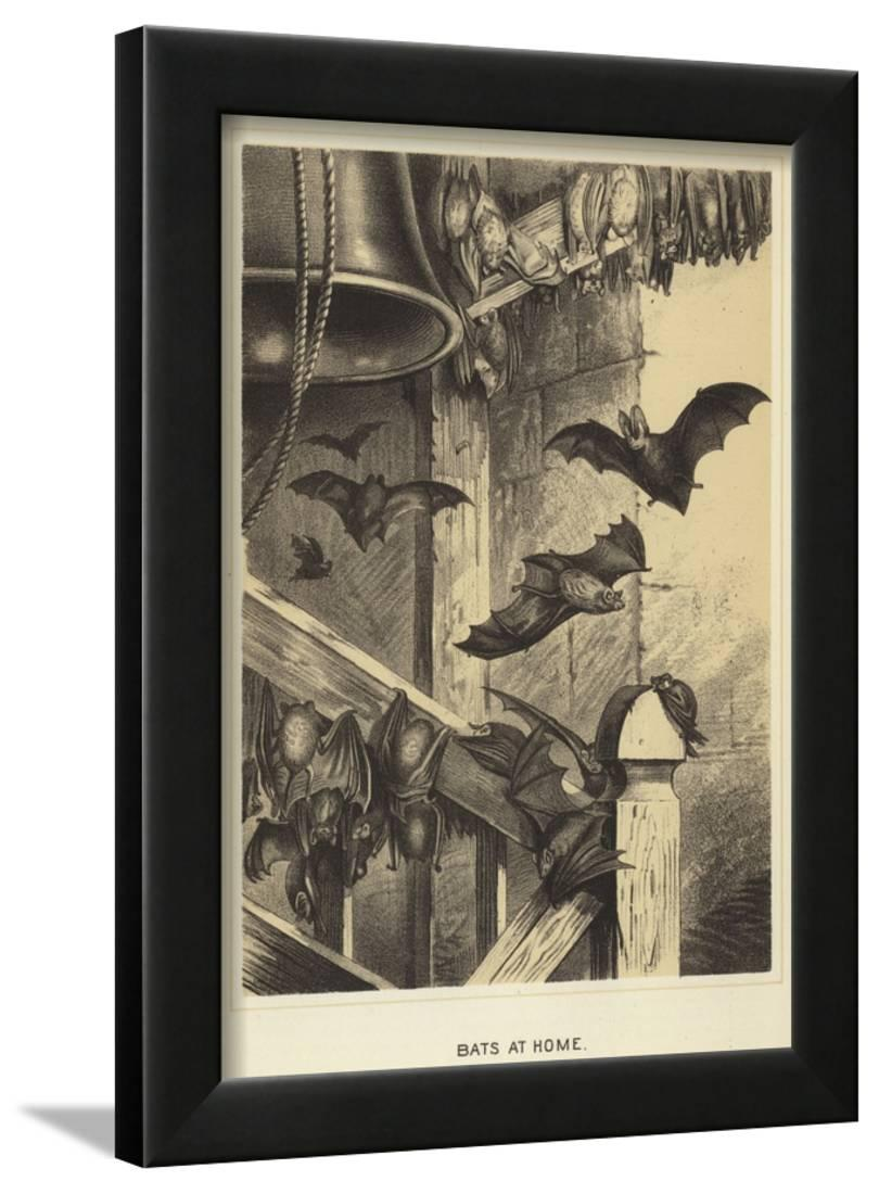 Bats At Home Framed Print Wall Art