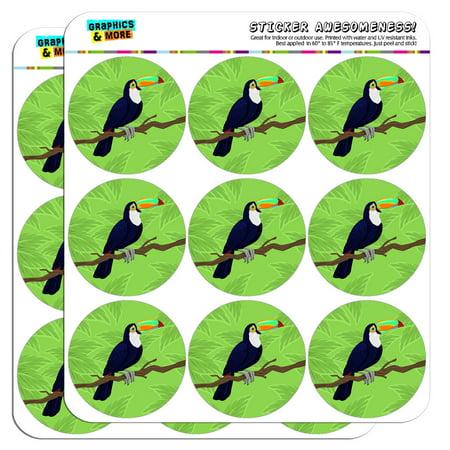 Toucan Jungle Parrot Bird 2
