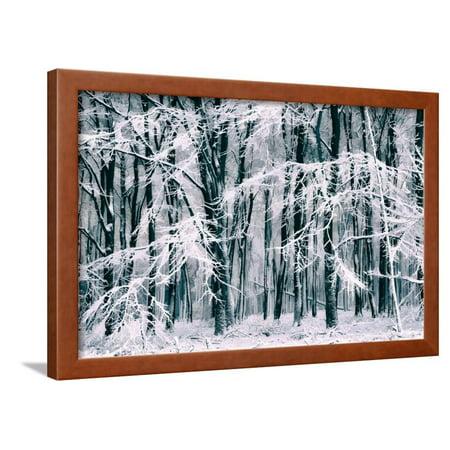 Winters Veil Framed Print Wall Art By Lars Van de - Vans Veil