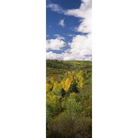 Dollar Tree Colorado Springs (Trees on a hill Last Dollar Road State Highway 62 Colorado USA Canvas Art - Panoramic Images (18 x)