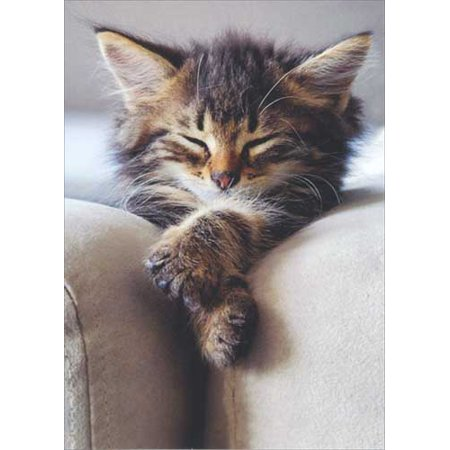 Fold Over Note Cards (Avanti Press Sleeping Kitten With Folded Paws Deluxe Matte Cat Blank Note Card)