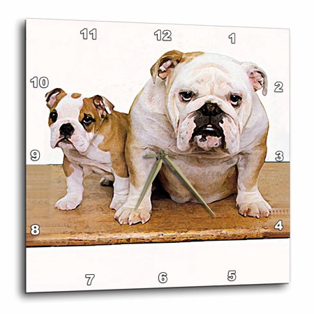 3dRose British Bulldog Male, Wall Clock, 13 by 13-inch Bulldogs Dimension Wall Clock