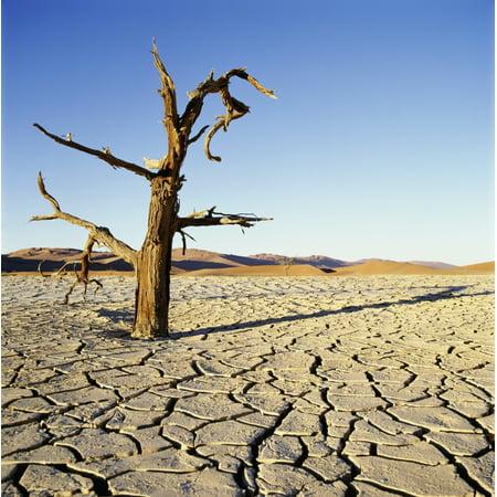 Posterazzi Dead Tree In Cracked Earth In Desert Canvas Art - Sasha Gusov  Design Pics (24 x (Sasha Grey Best Pics)