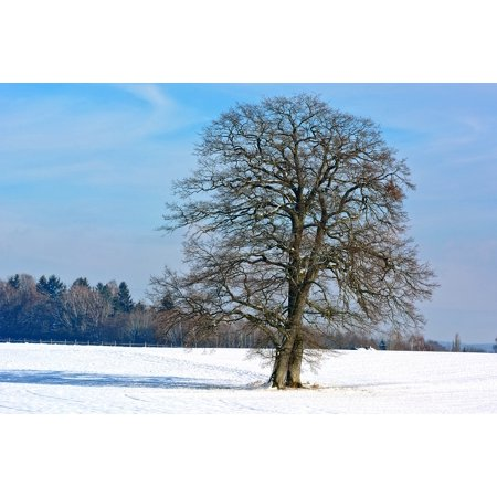 Canvas Print Silhouette Sky Snow Single Tree Winter Nature Stretched Canvas 10 x (Silhouetted Against Snow)