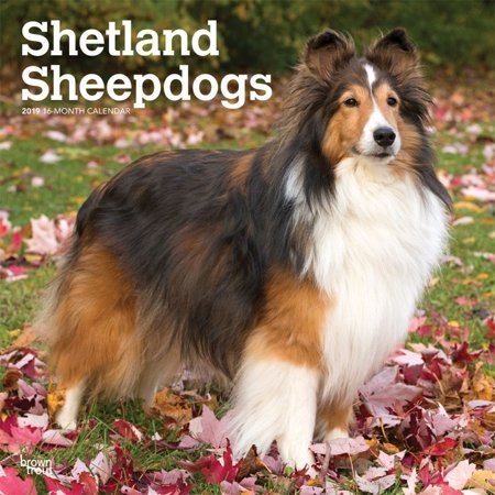2019 Shetland Sheepdogs Wall Calendar,  by BrownTrout