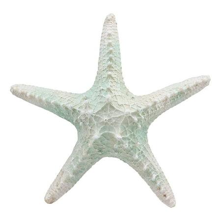 Large Sea Shells (Ebros Large Ocean Coral Sea Star Shell Starfish Statue 8