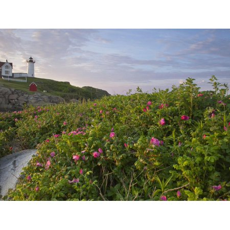 Sunrise Skies over Nubble Aka Cape Neddick Lighthouse in York, Maine, Usa Print Wall Art By Chuck