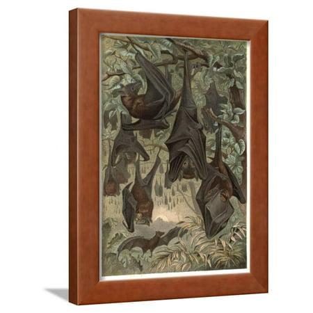 Egyptian Fruit Bat By Alfred Edmund Brehm Framed Print Wall Art Stefano Bianchetti