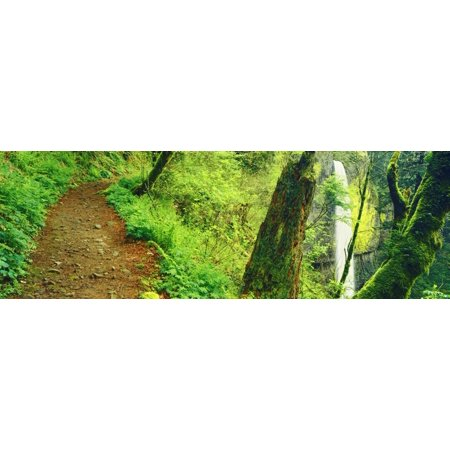 Waterfall and hiking trail Latourell Falls Columbia River Gorge Oregon USA Canvas Art - Panoramic Images (27 x 9) (Hiking In The Columbia Gorge)