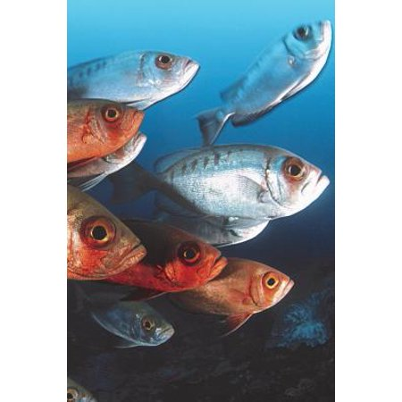 (Fish Friends Blank Book Lined Journal (4x6))