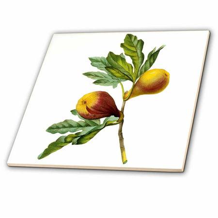 (3dRose Redoute Vintage Watercolor Fruit Fig Ficus Violacea - Ceramic Tile, 6-inch)