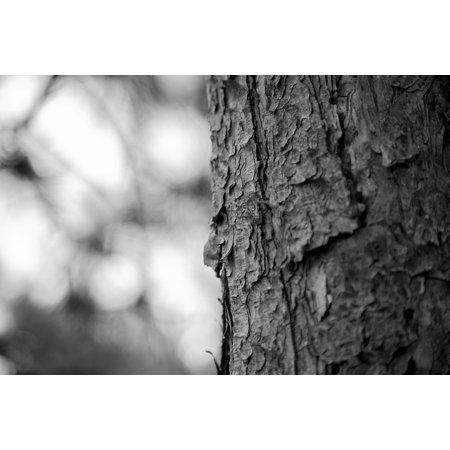 Wood Dead Eye - LAMINATED POSTER Memories In My Eyes Dead Wood Era Memory Tree Wood Poster Print 24 x 36