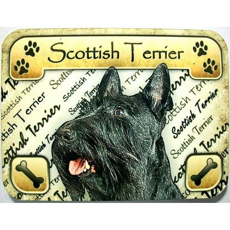 Scottish Terrier Photo Fridge Magnet (Scotland Fridge Magnet)