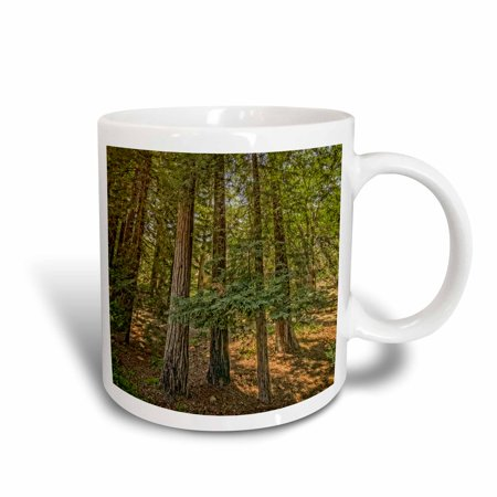 - 3dRose Redwood Tree Grove, Ceramic Mug, 11-ounce