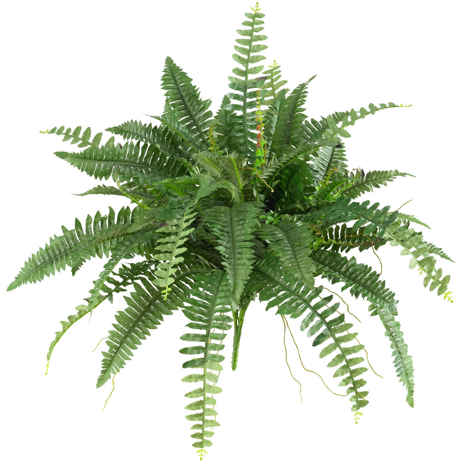 "Nearly Natural 40"" Boston Fern, Set of 2"