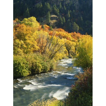 Maples and Birches Along Blacksmith Fork River, Wasatch-Cache National Forest, Utah, USA Print Wall Art By Scott T. Smith ()