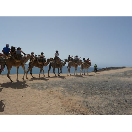 LAMINATED POSTER Camel Caravan Ride Desert Ship Transport Poster Print 24 x 36