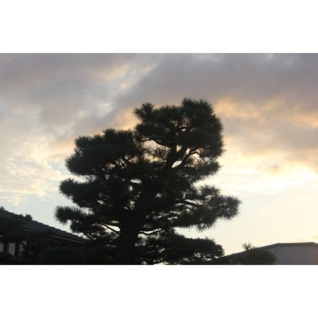 Framed Art for Your Wall Light Nature Pine Tree Tree Silhouette Sunset 10x13 Frame