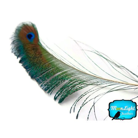 5 Pieces - Natural Peacock Sword With Eye Unique Feathers