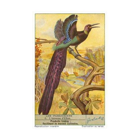 Bird of Paradise Print Wall Art