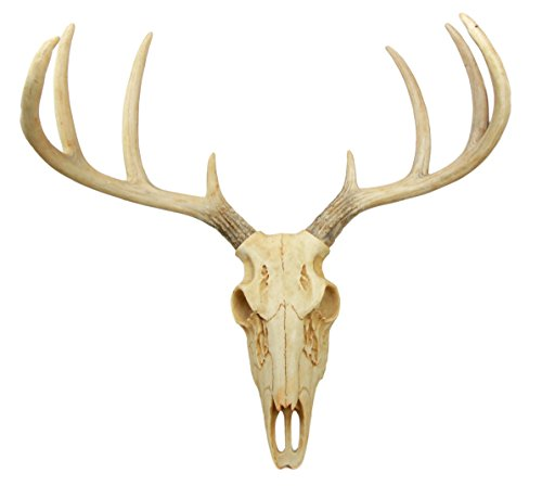 Atlantic Collectibles Rustic Hunter Deer 8 Point Buck Skull Antler Rack Wall Mounted Plaque Trophy Decor Figurine... by Atlantic Collectibles